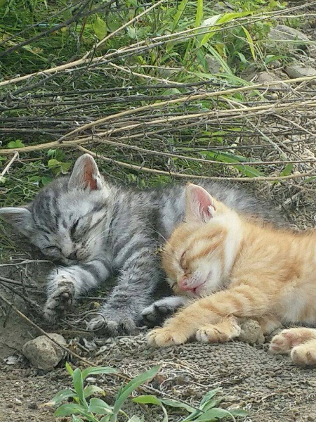 猫 群馬 保護